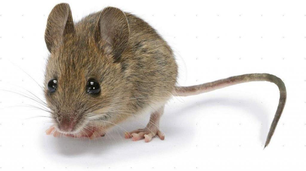 Картинки для мыши, картинки анимация любовь