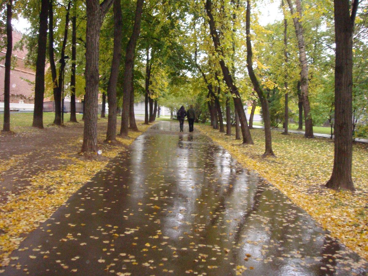 обиход фото дождливой осени в парке замыслу автора