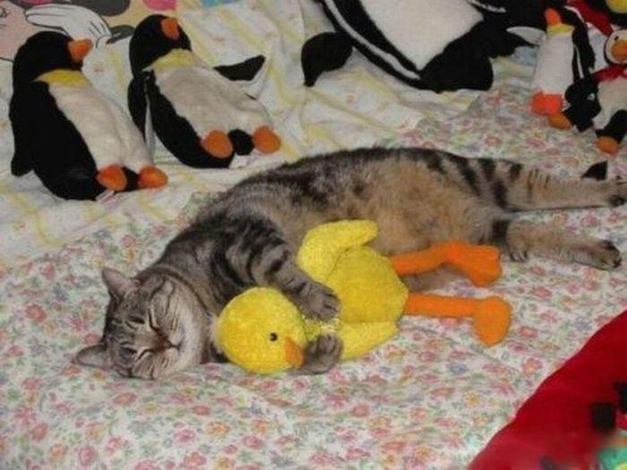 Спят усталые игрушки картинки прикольные, день валентина для