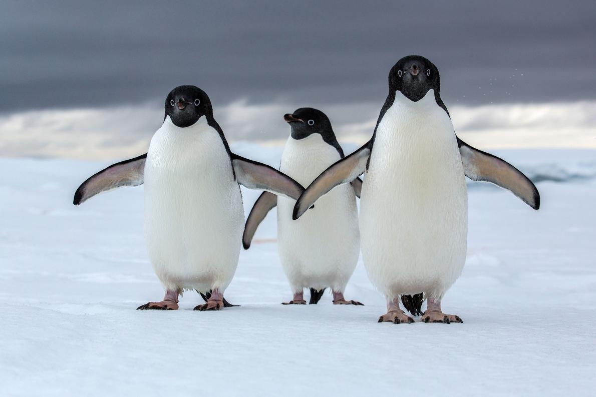 Поздравления деревянной, смешные картинки пингвинчиков