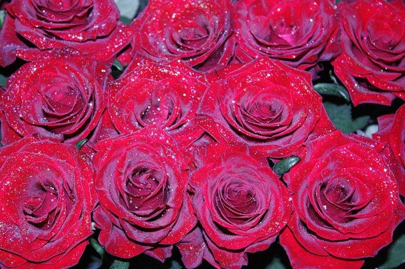 хочется, фото блискучих роз нравится, приятный