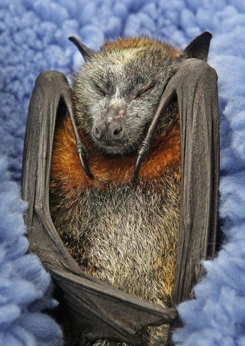Открытки годовщиной, смешные картинки летучих мышей