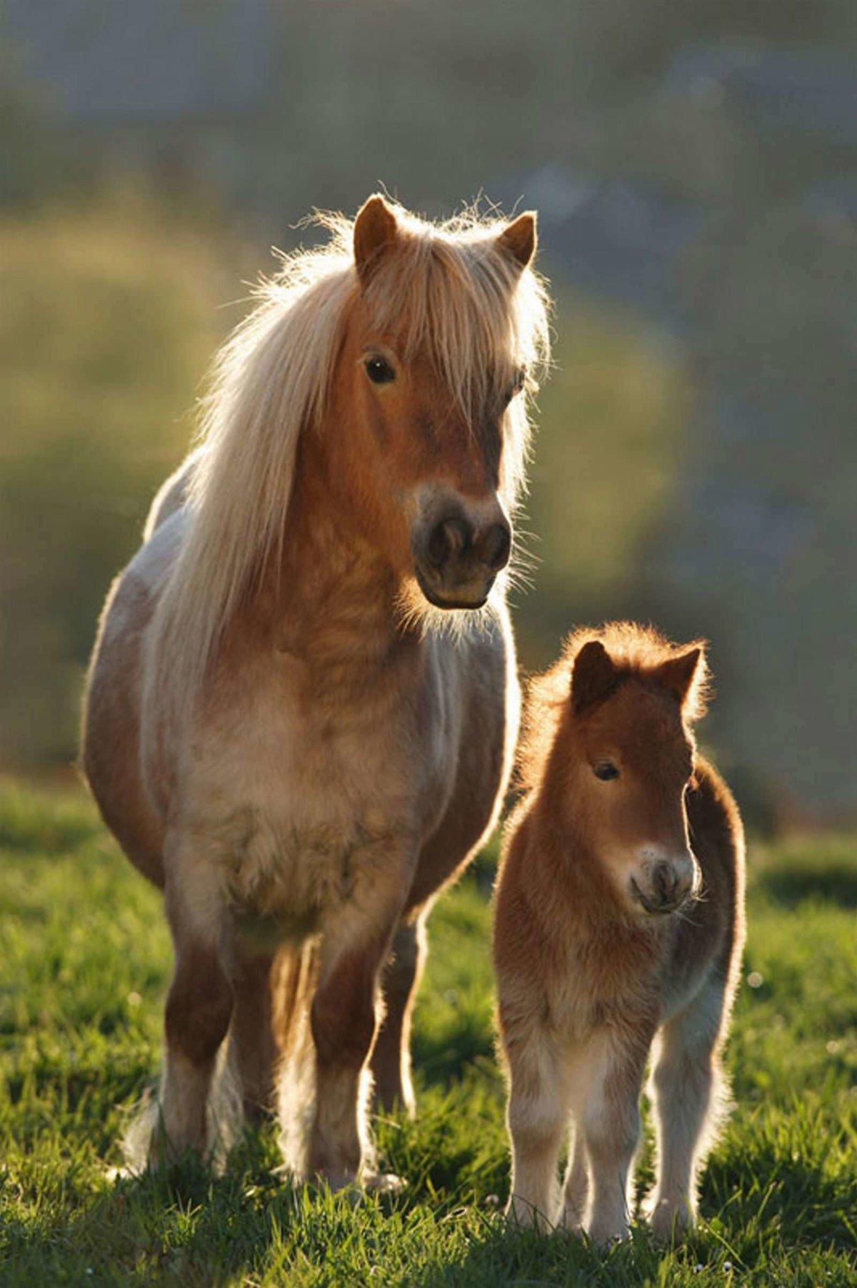Картинки лошади мини