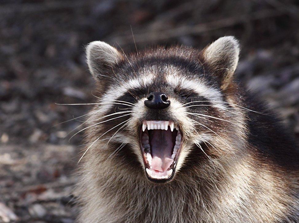 Видал зубки?!