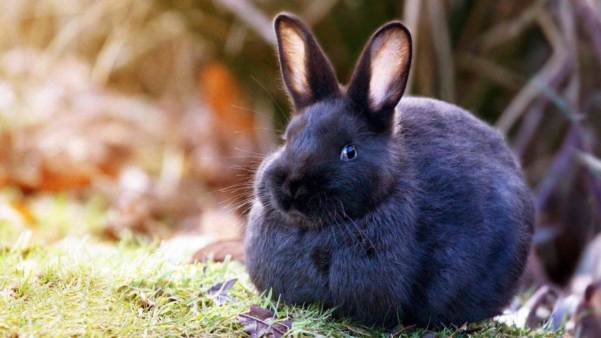 Кролики картинки фото