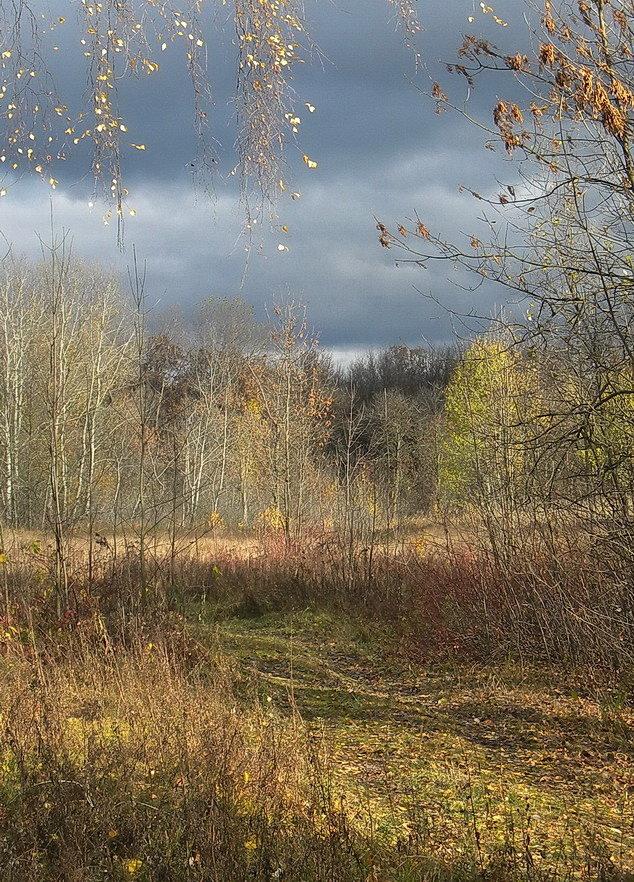 Осень#беларусь #гомель #небо #осень #пейзаж #природа #тучи