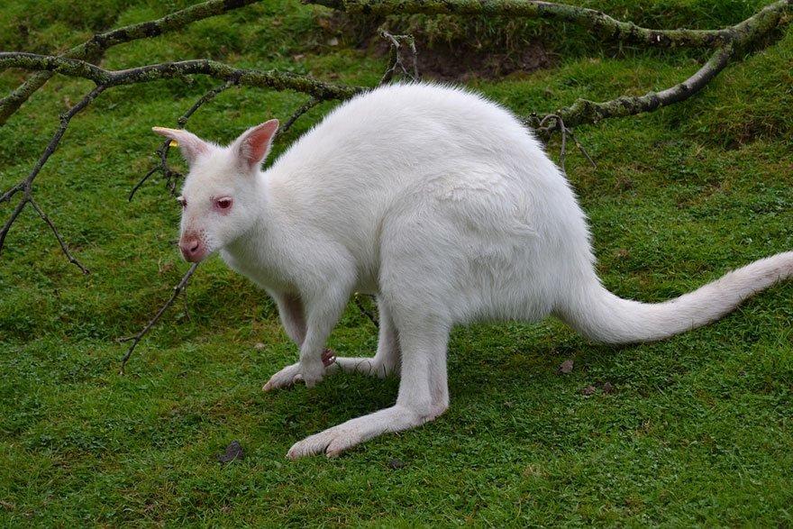 его фото животных альбиносов позволяет копировать картинку