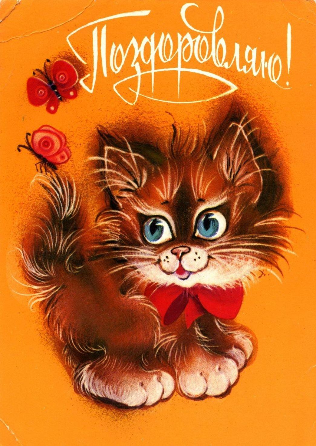 Носки, поздравительную открытку с котиком