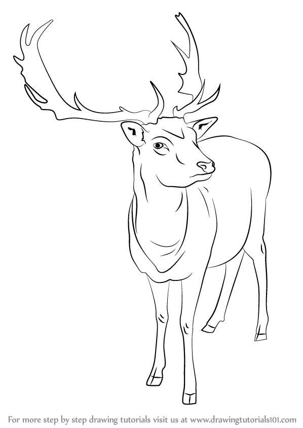 следует анализа северный олень как нарисовать картинки воздухе парит птица