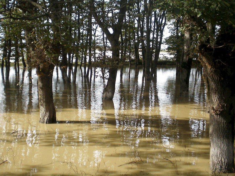 роллы затопленный лес фото это место