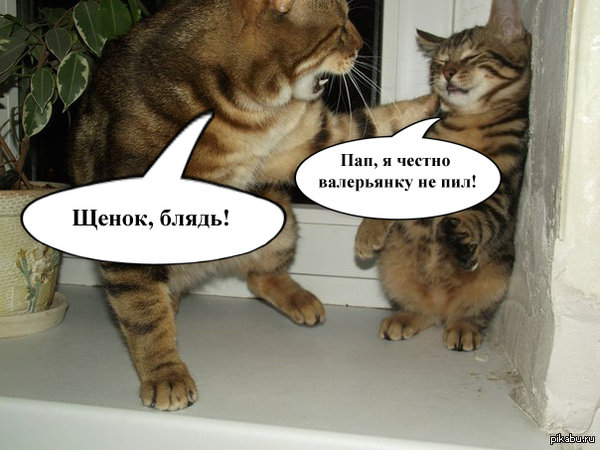 Картинки с котами и надписями матами котами