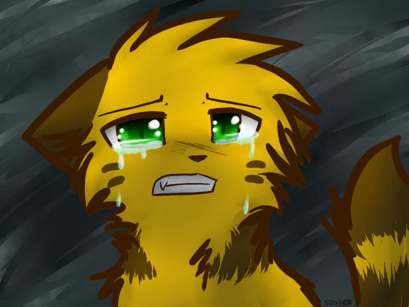 Картинки коты воители плачут
