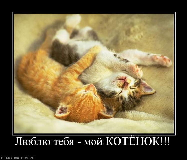 картинки ты мой самый любимый котик словам