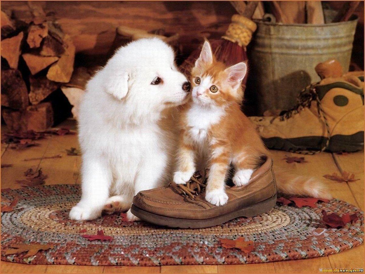 Картинки кошки и котята и коты собаки с щенками