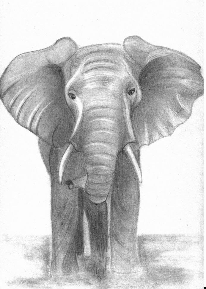 Слон картинки для срисовки