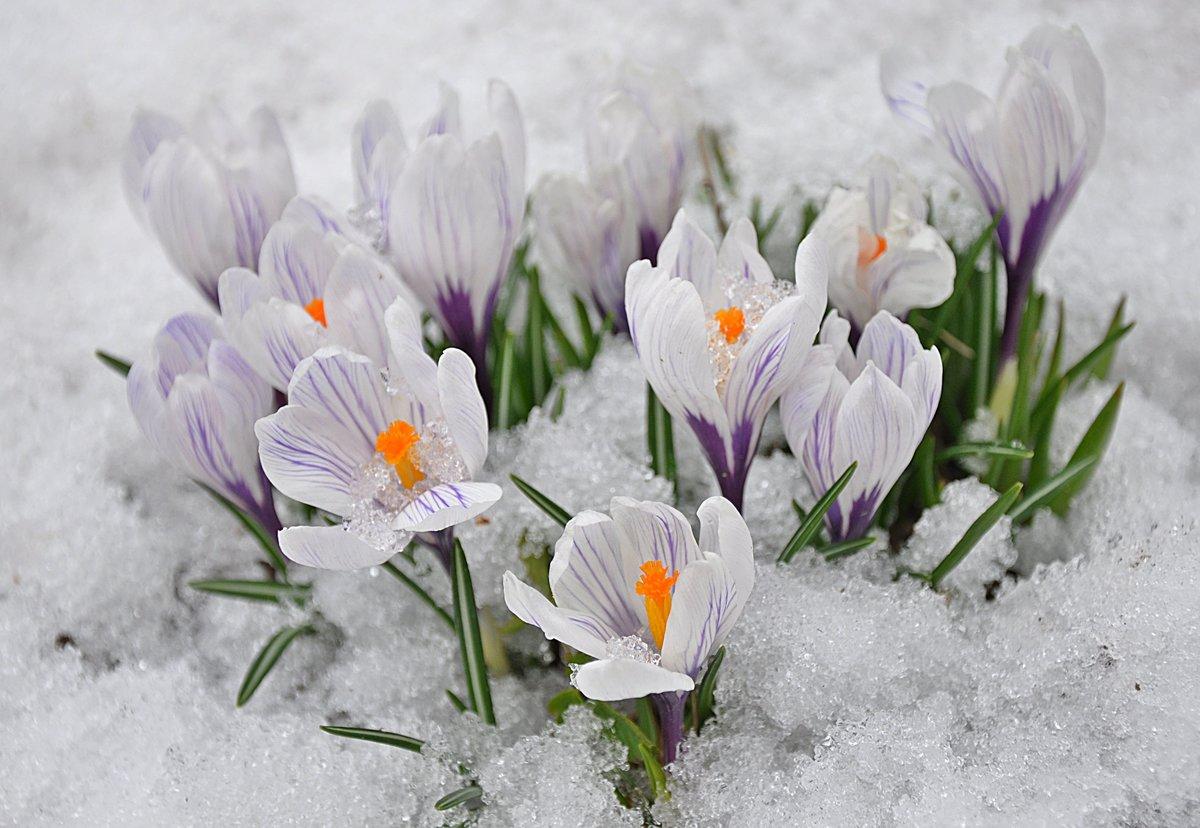 Весна идет картинки на рабочий стол, настроения