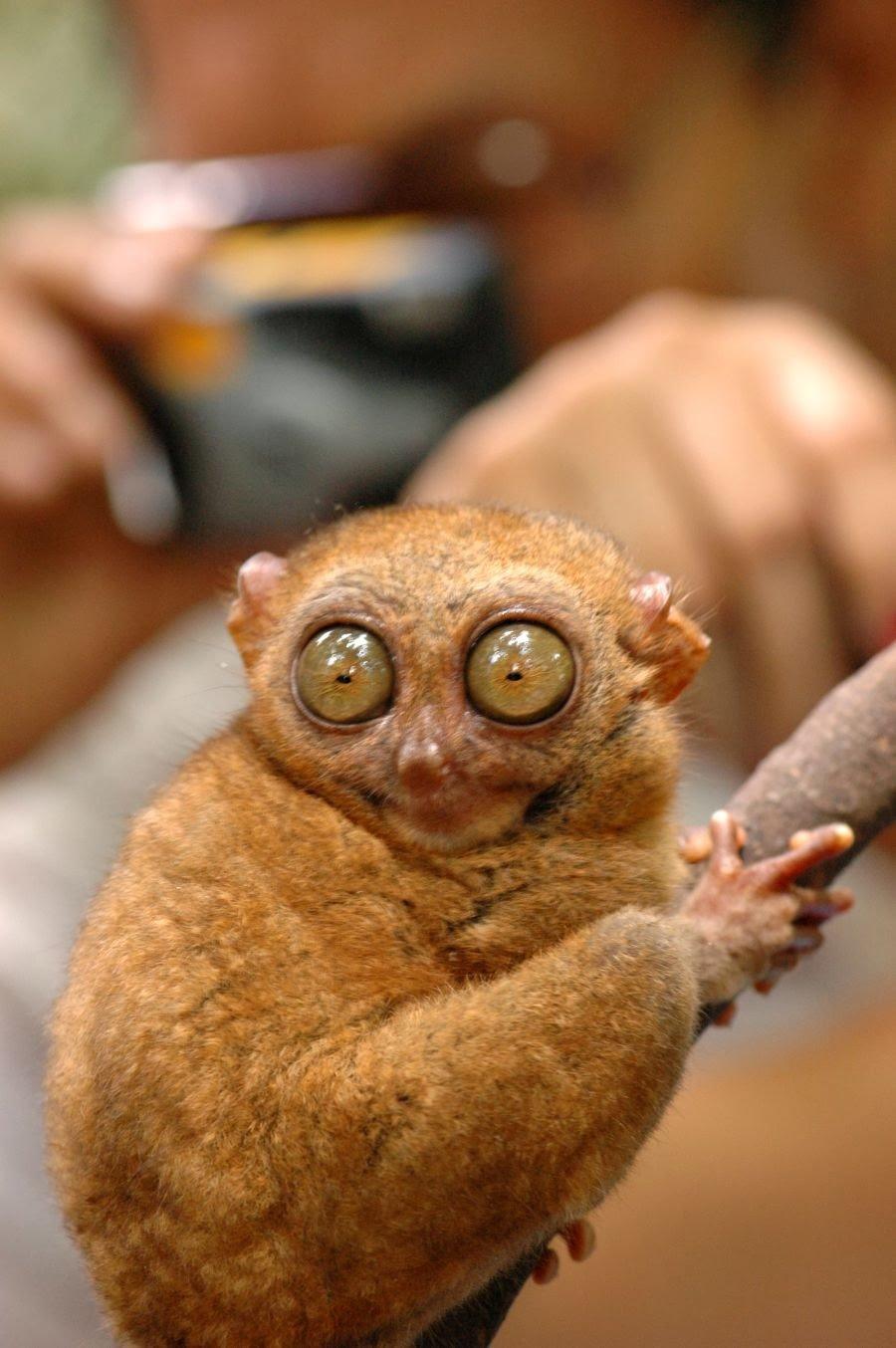 Для, очень смешная картинка животного