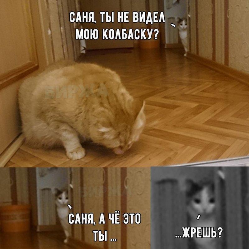 Любовь картинки, смешные картинки с надписями до слез про котов без мата