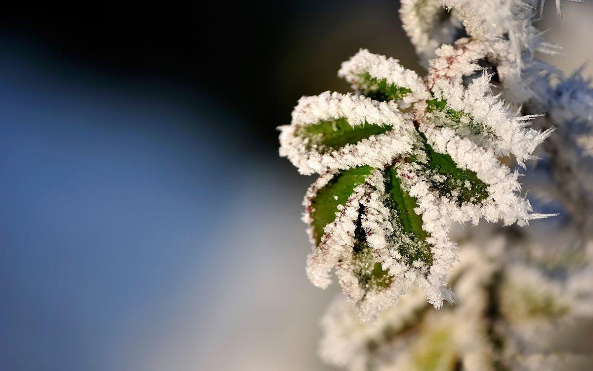 Однако имеется еще несколько видов осадков, отличающихся от типичных форм дождя и снега.