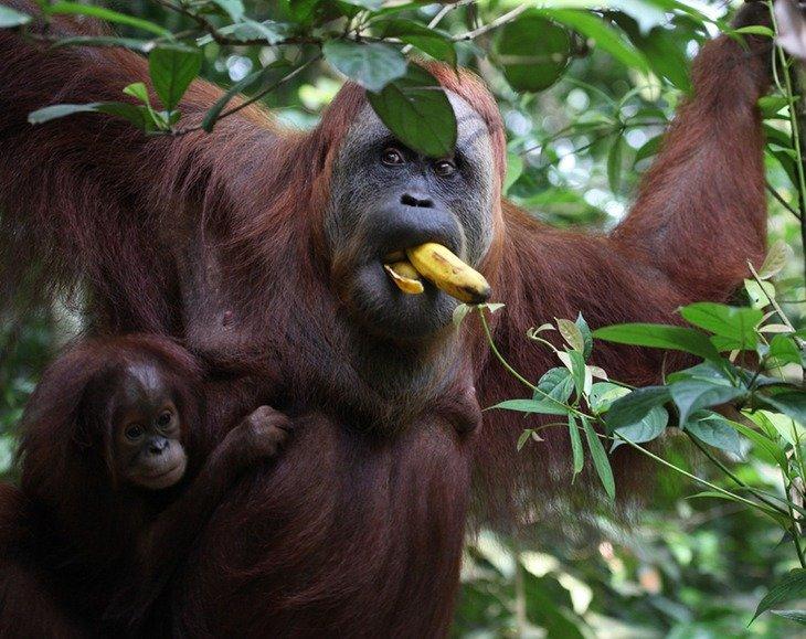 животные индонезии фото оборудование, желательно зеркальный