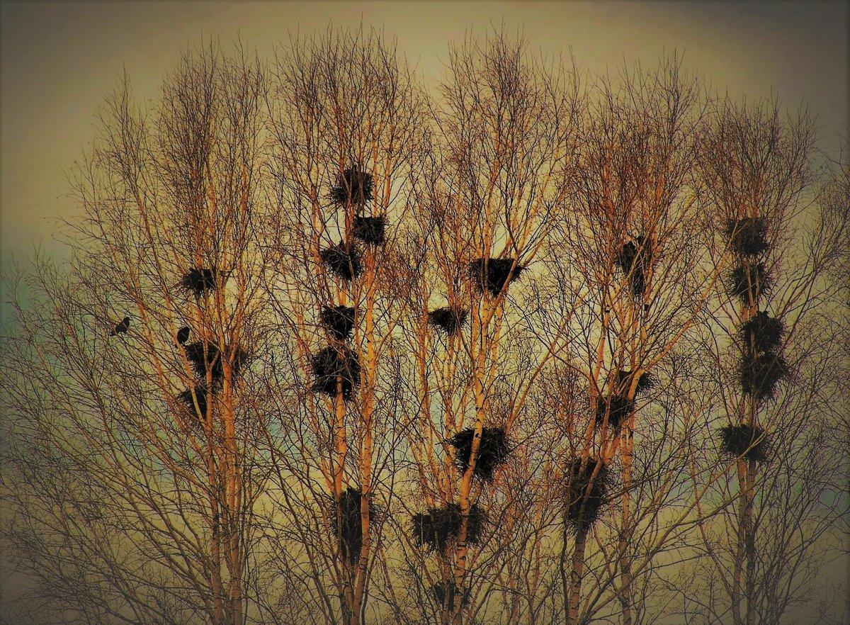 помимо весна грачи прилетели одной