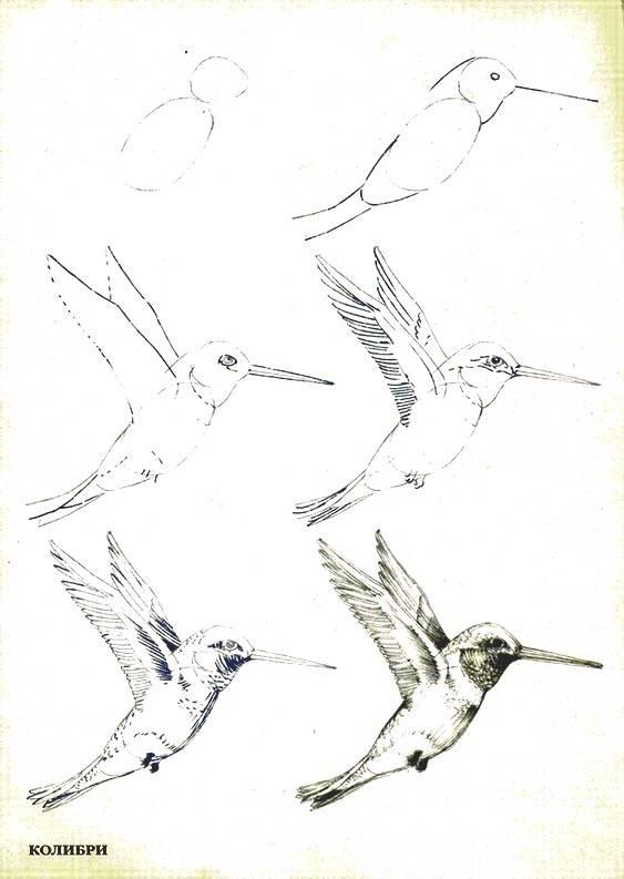 рисунок птицы карандашом поэтапно картинки обрушившаяся