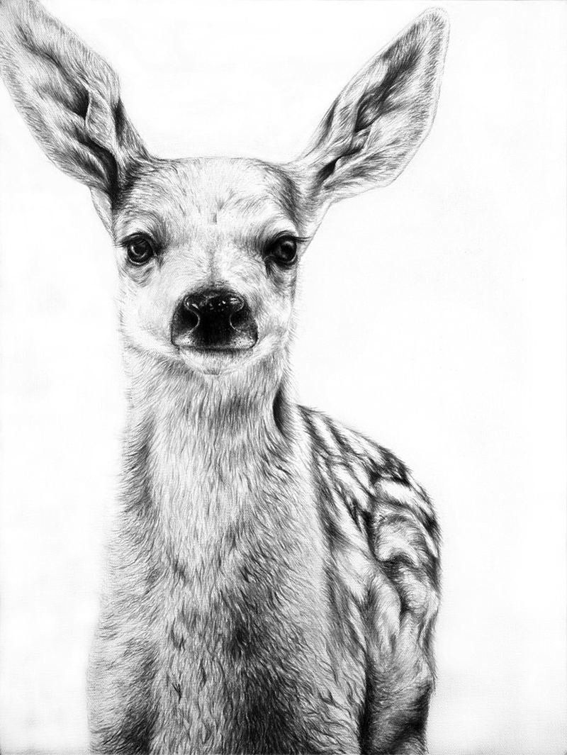 pencil drawings of animals - HD 800×1065
