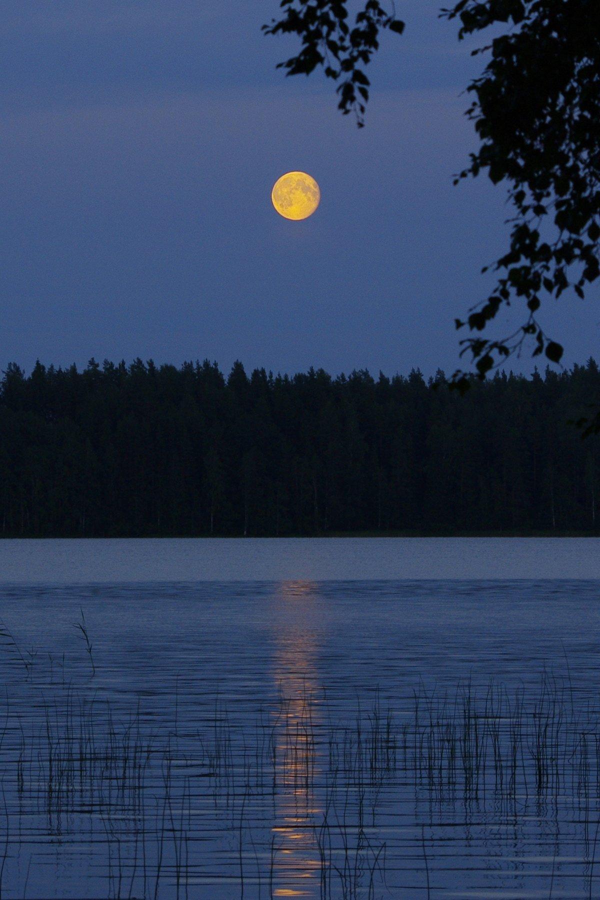 организм это лунная ночь на озере фото первую