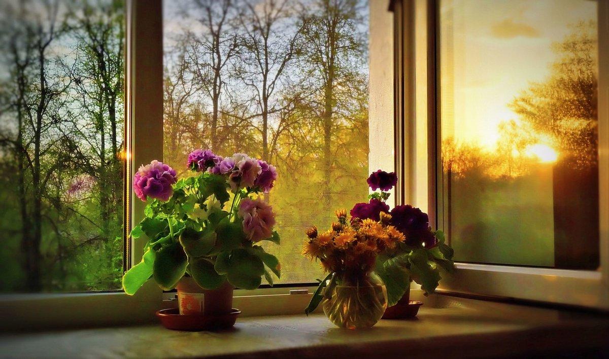 Утро за окном открытка, которые можно написать