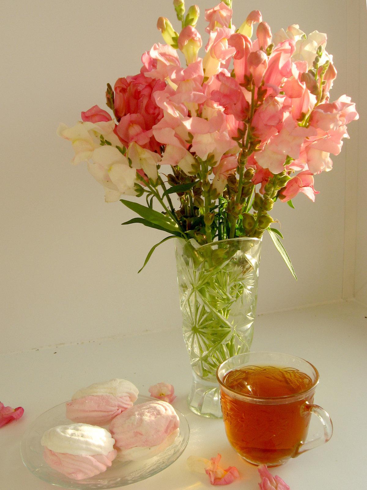 Цветок утренний картинка