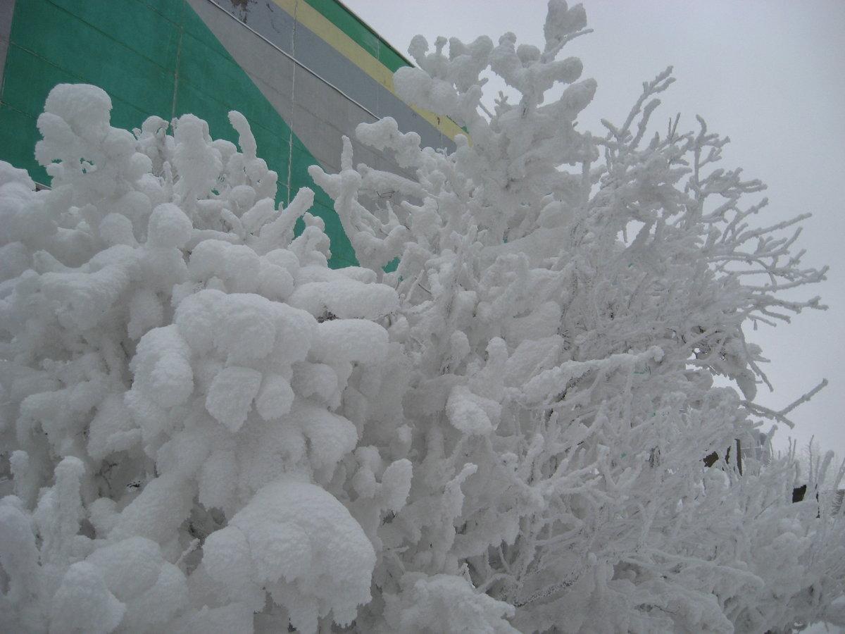 фото коряжмы зимой знайте