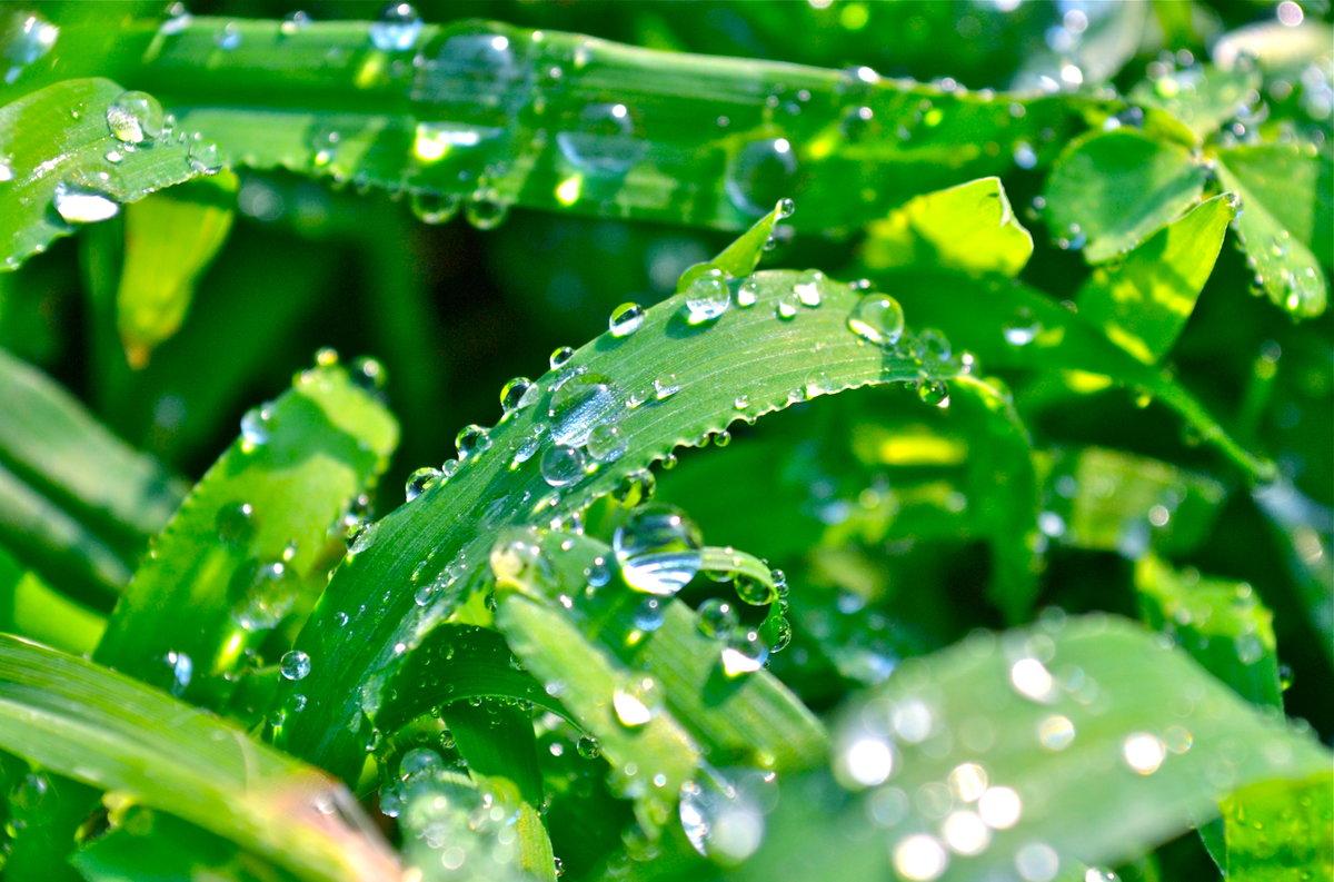 Роса на траве в картинках