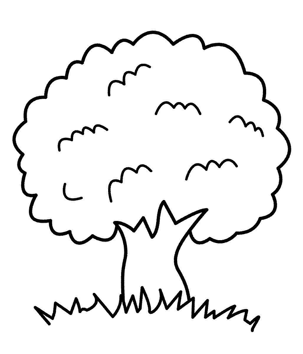 Раскраска для детей дуб