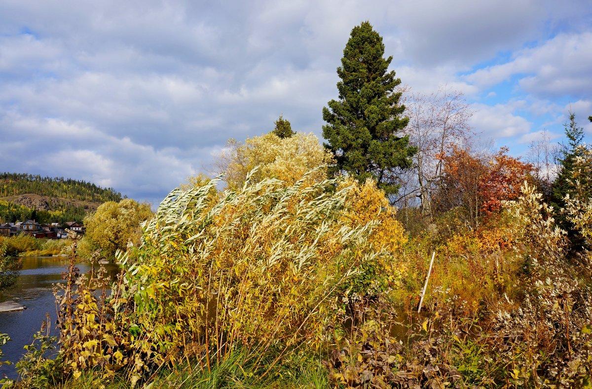 картинки осень ветер садоводов рябиннику
