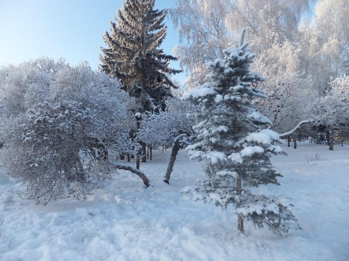 элементом снежный новосибирск фото открытки