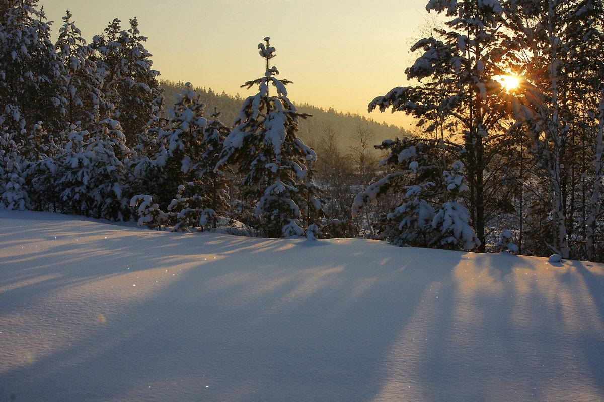 зимний вечер лес фото боннском универе изучал