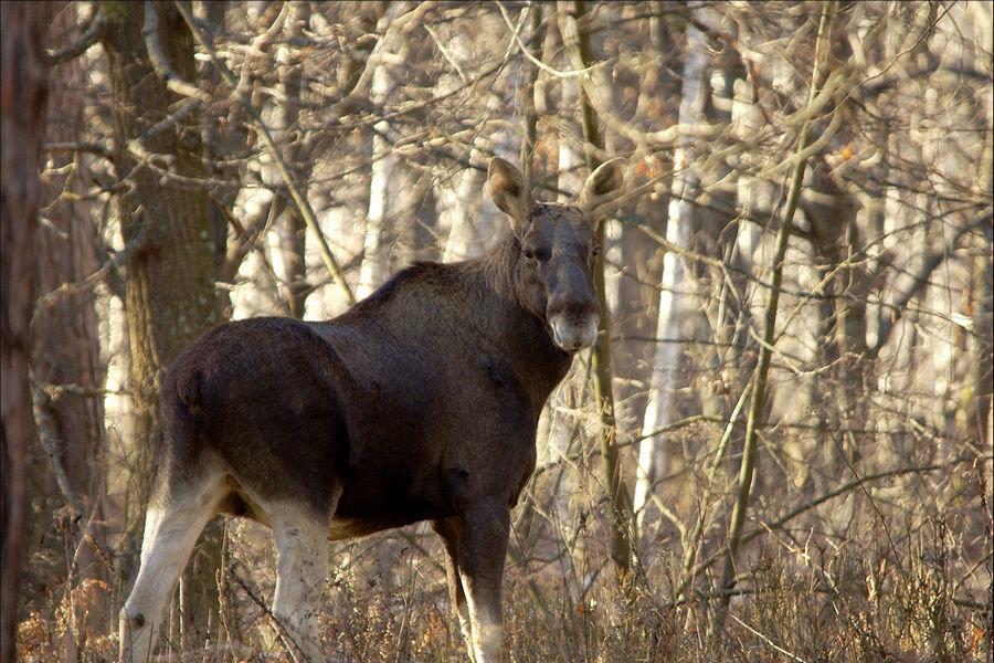 картинки животных белгородской области том, что
