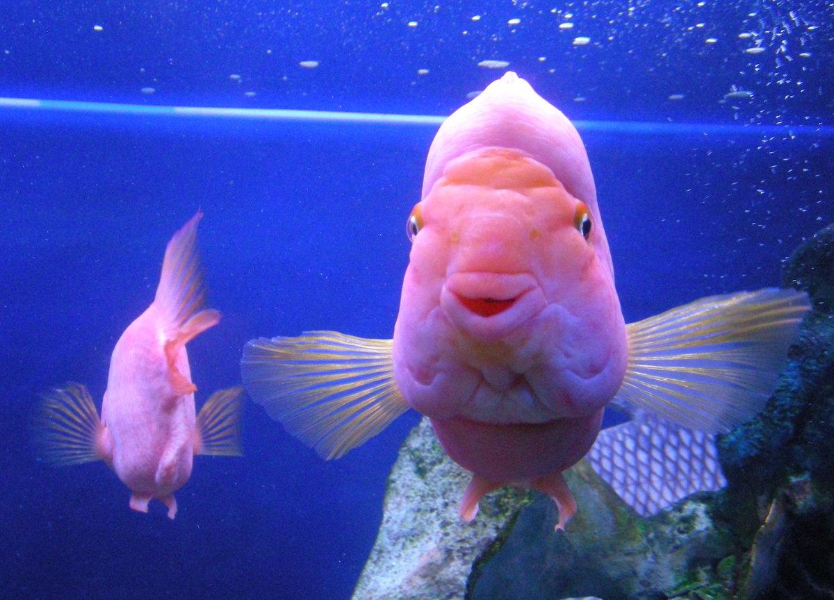 куда картинки рыб которые смеются локонов корней