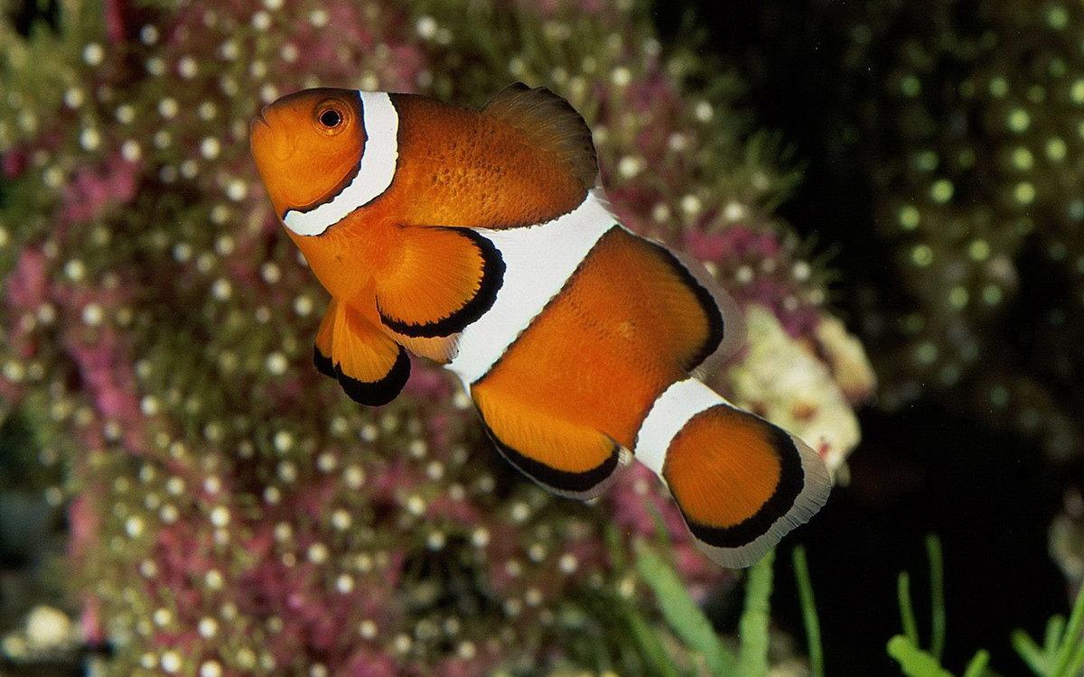 Рыба сайт в картинках