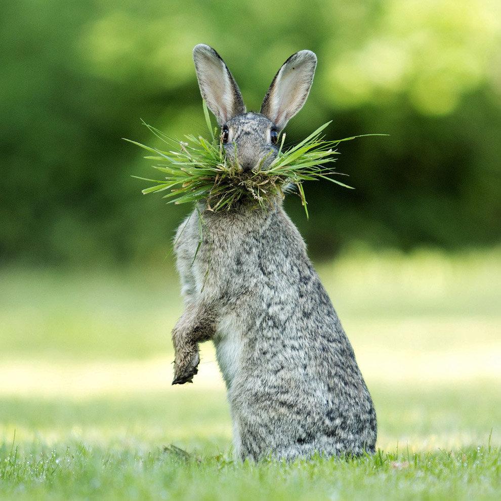 Смешные картинки с надписями с кроликами, картинки