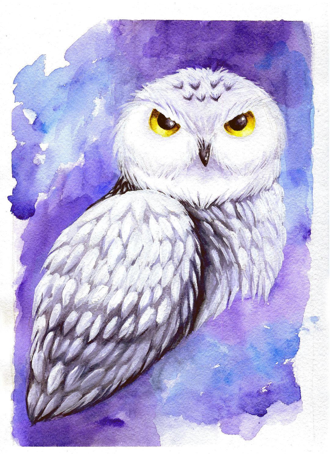 Картинки нарисованной совы