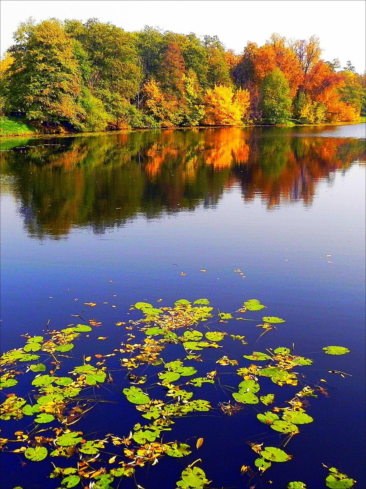 осень на пруду картинки деталь