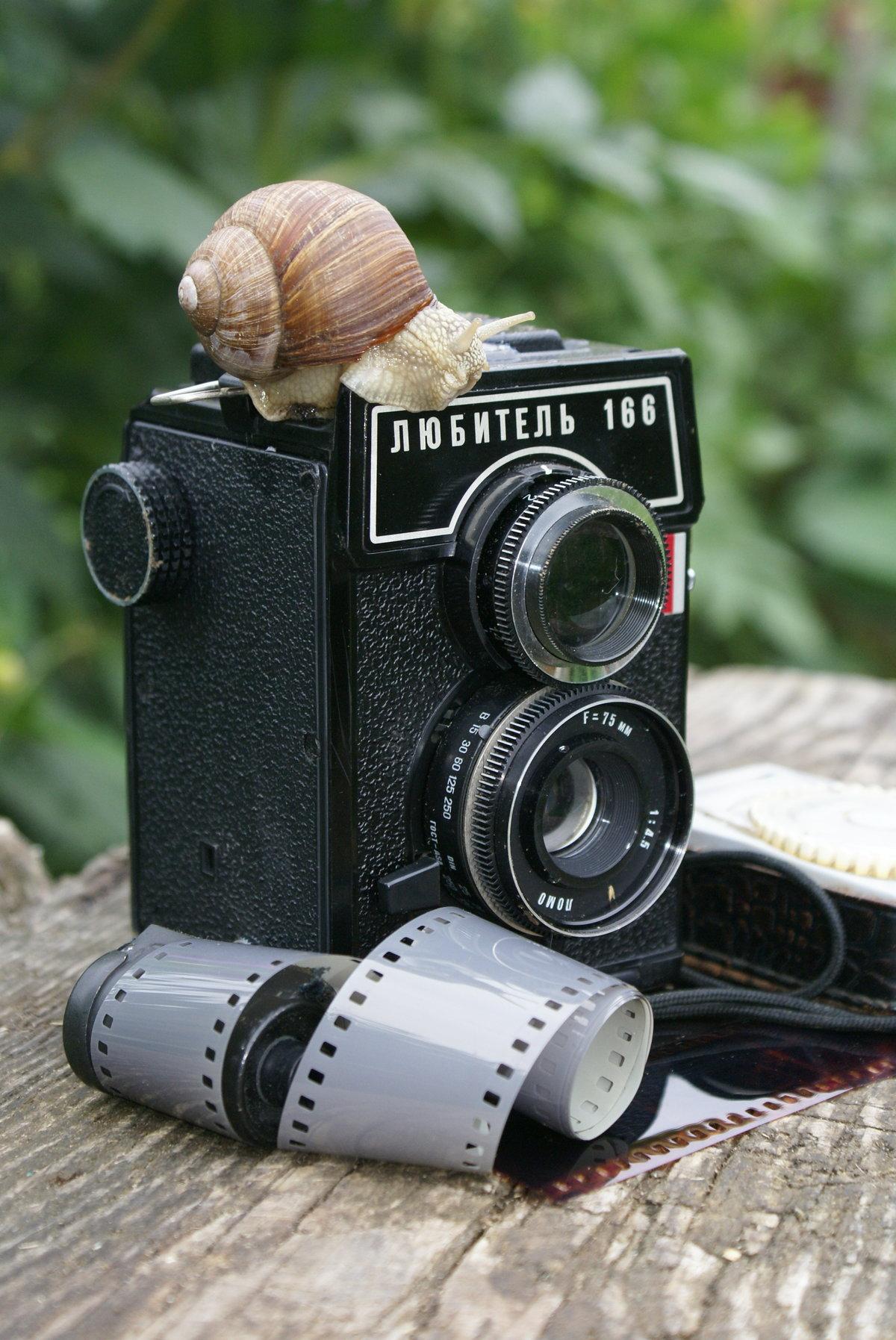 Какой фотоаппарат нужен для фотостоков