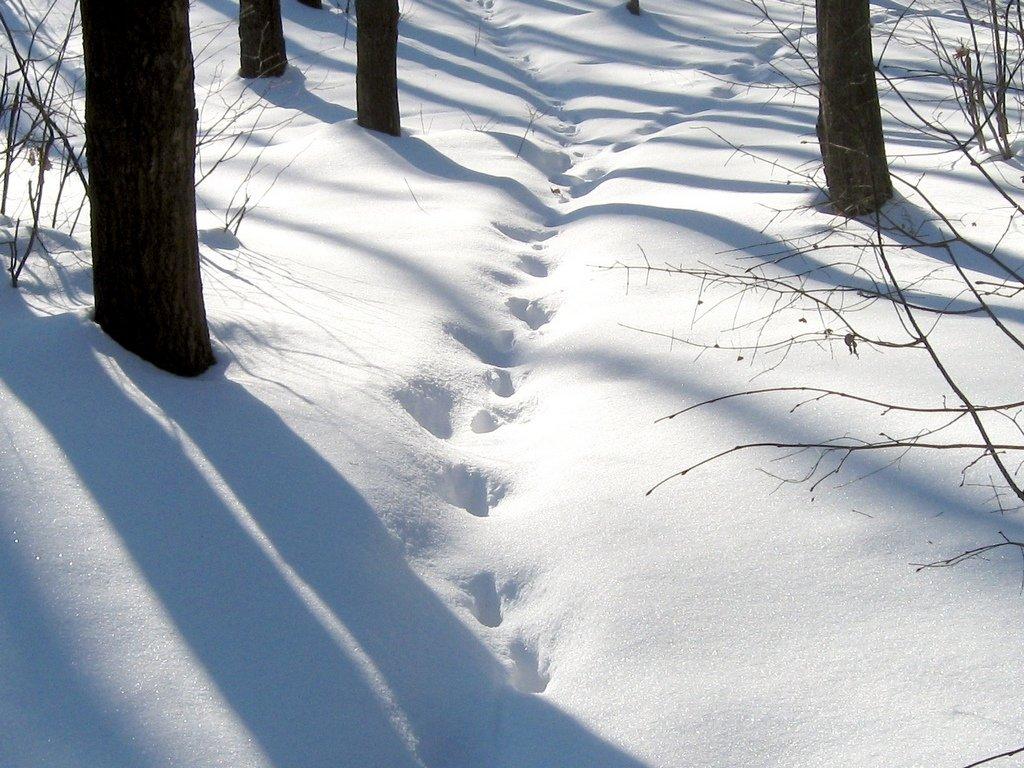 фото следов человека на снегу
