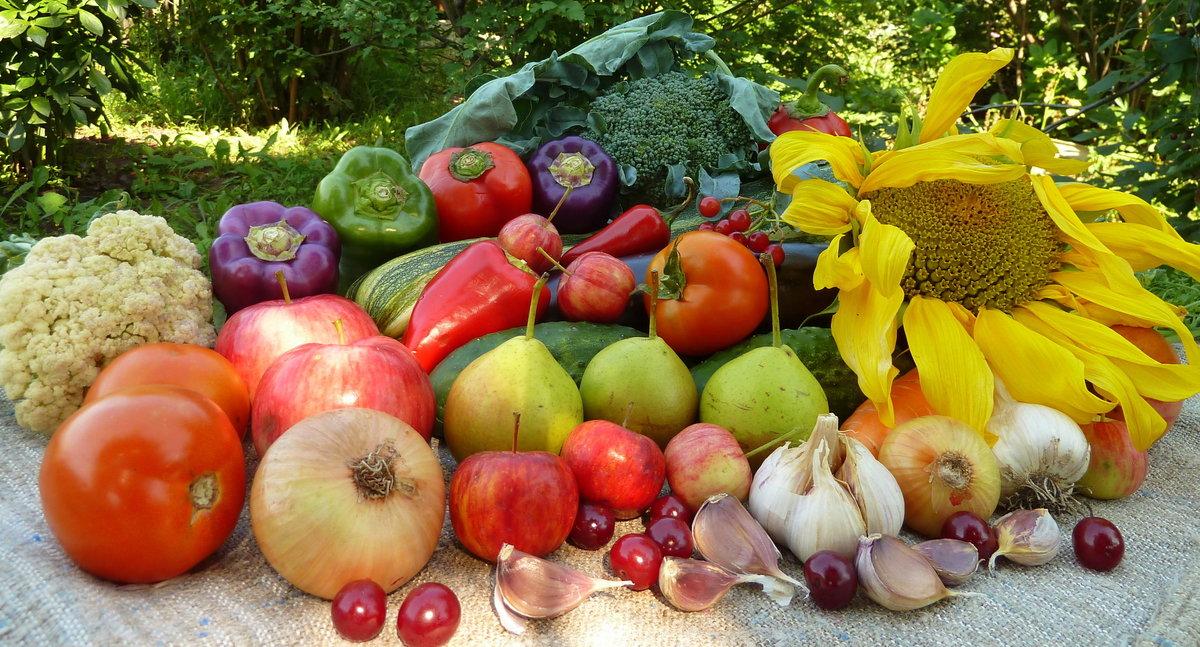 мир нам, фото культурных плодов овощей ягод россии этом