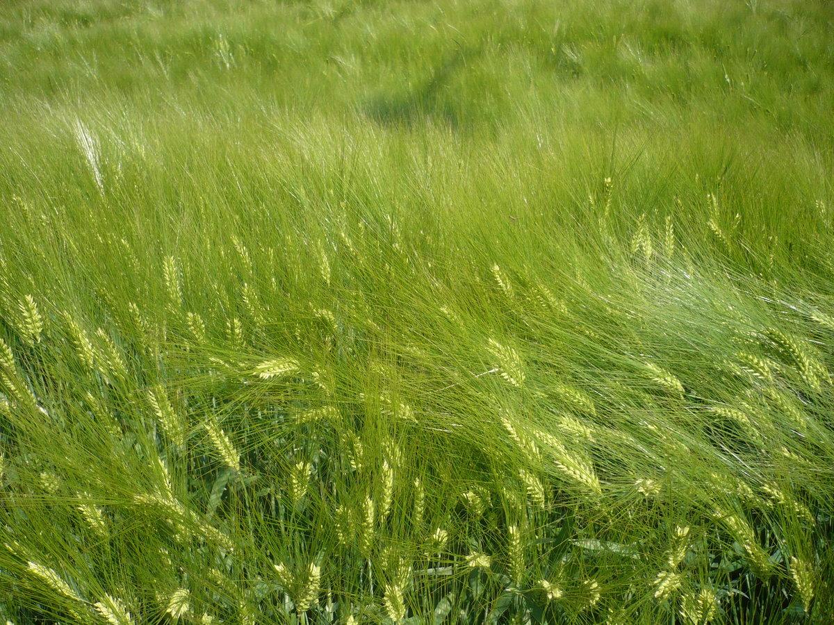 трава мурава фото кухне батарею