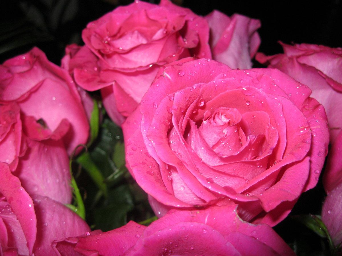 Красивый букет роз с росой
