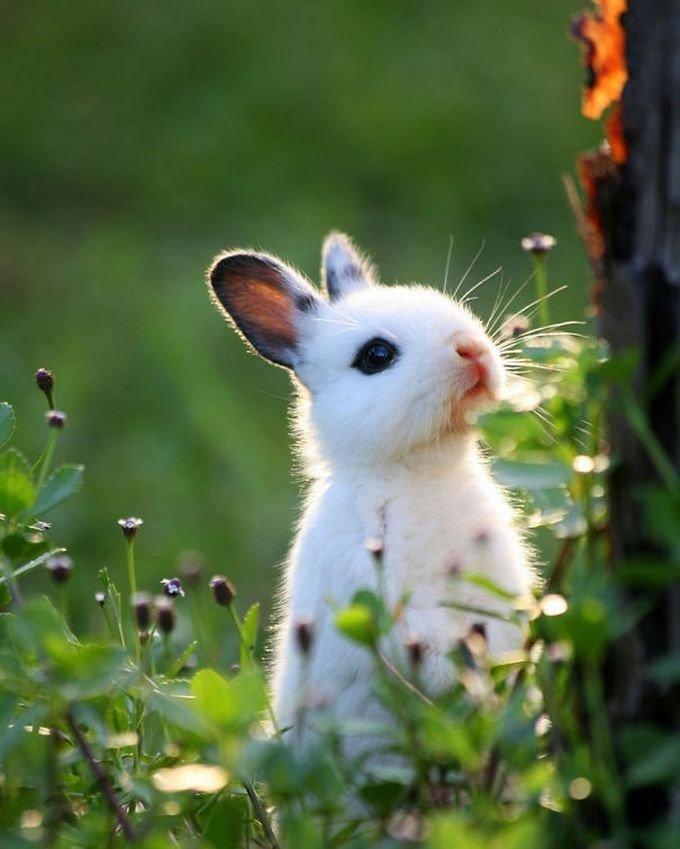 Красивые картинки с зайками, днем пограничника прикольные