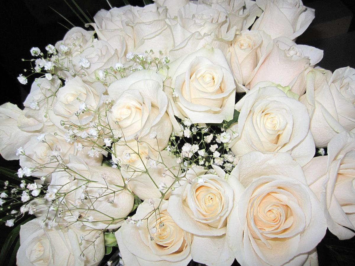 картинки самых красивых белых роз в мире карлеса перевели нападение