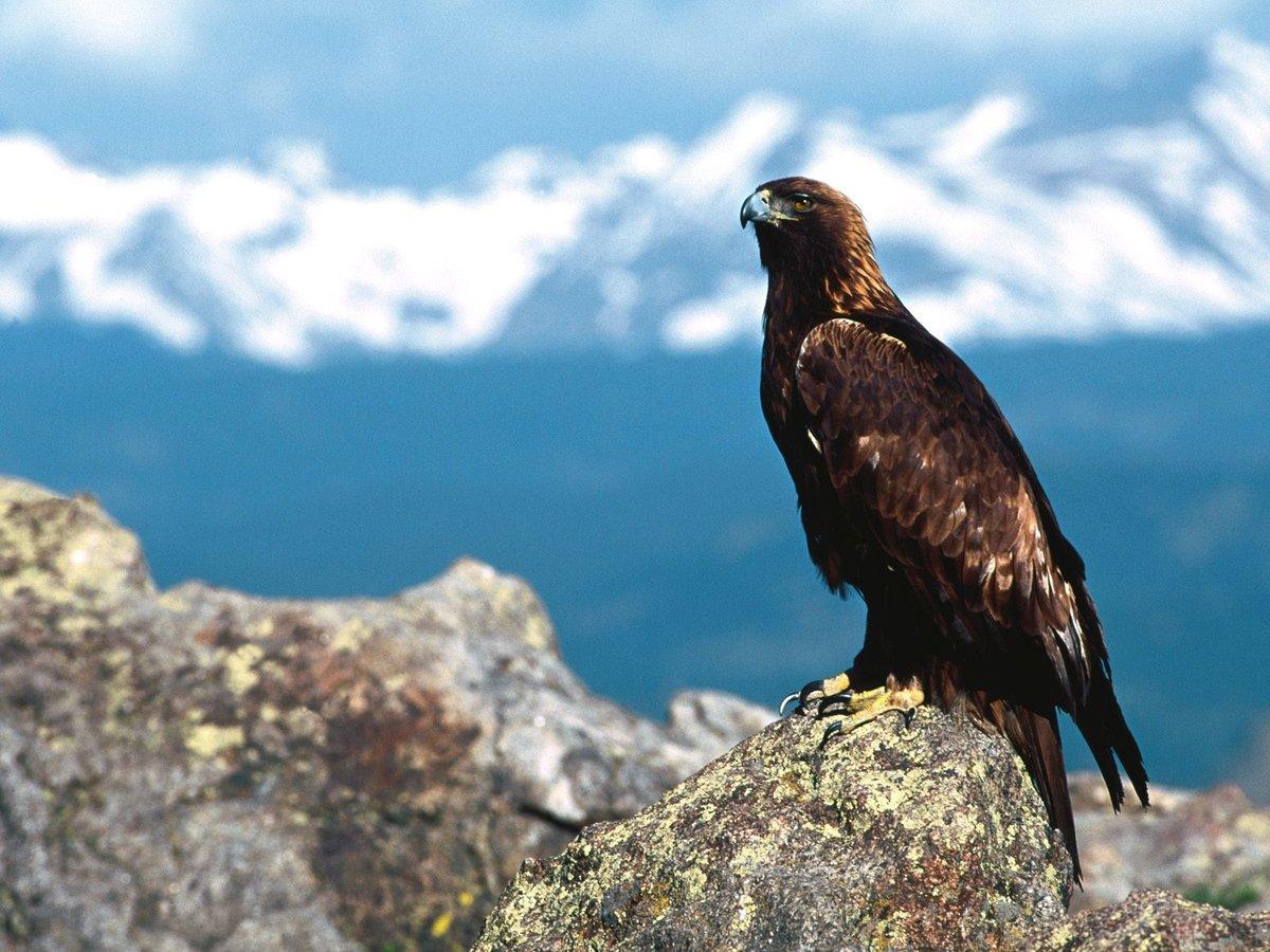 Птицы в горах сочи